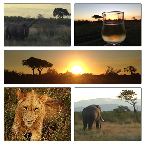 Kruger National Park (photo courtesy of @Claudiabia)
